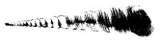 海螺的黑白图片