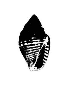 矢量海螺图片