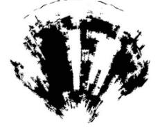 貝殼黑白圖圖片
