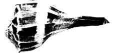 黑白海螺图片