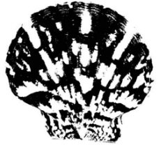 贝壳黑白图图片