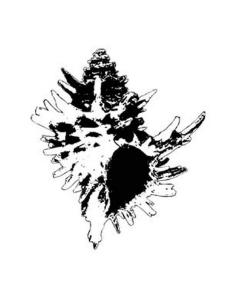 海螺矢量图片