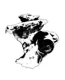 海螺矢量图图片