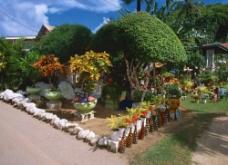 园林盆景图片