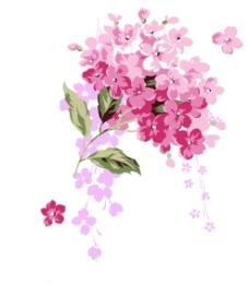 花朵水彩画图片