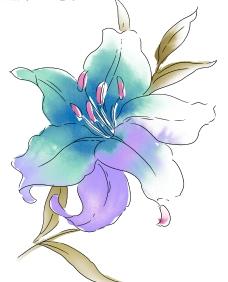 精美韓國花朵PSD圖片