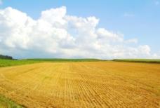 秋割後的田地图片