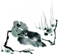 水墨鸟儿33图片