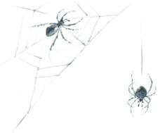 水墨风格的蜘蛛图片