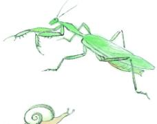 水墨风格的螳螂图片